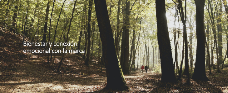 Un bosque de arboles altos y húmedo que representa el bienestar